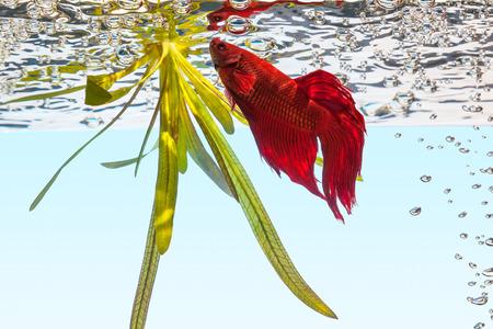 freshwater aquarium plants: Aquarium fish