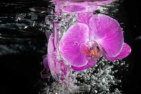 fluidity: Pink tropical orchid under water