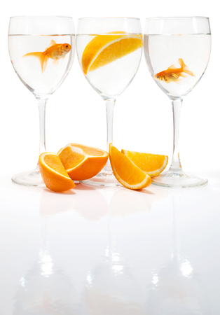 Goldfish in the water on a white background