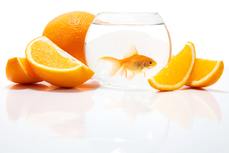 pet photography: Goldfish in the water on a white background