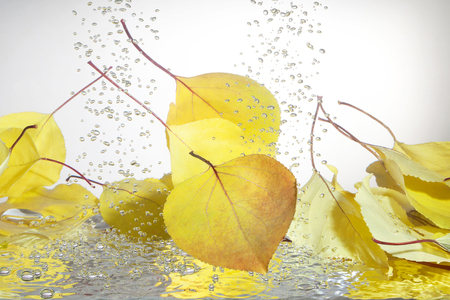 Autumn leaves in the water on a white background