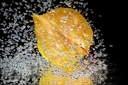 Autumn leaf in water on a black background