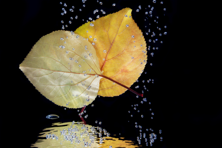 Autumn leaves in water on a black background