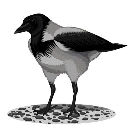 City grey a raven on a white background