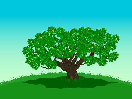 Sprawling green oak with acorns
