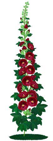 Crimson malva on a white background Stock Photo - 6968995