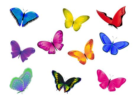 Set from ten multicolored butterflies on a white background   Stock Photo