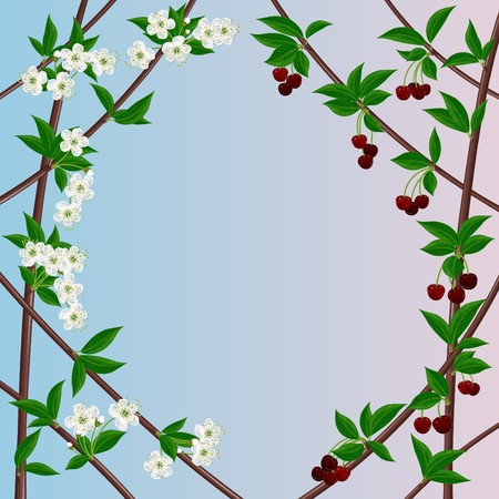 Gentle framework with a blossoming and fructifying cherry Illustration