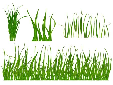 grass blades: Set of a realistic grass