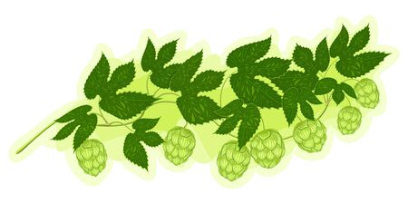 Branch of hop with cones Illustration
