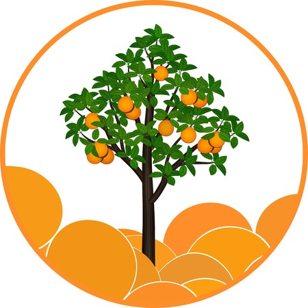 Fructifying orange tree on an abstract background