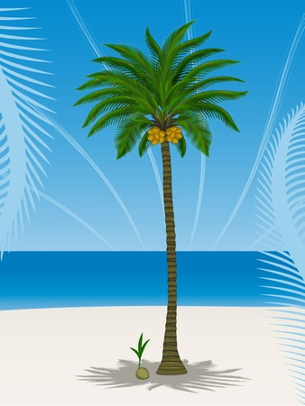 Coconut palm tree and its sprout at sea coast