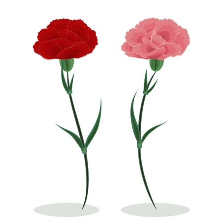 Red and pink carnations on a white background Illustration