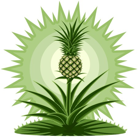 Young pineapple against the stylized landscape