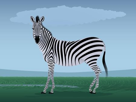 Graceful zebra against the stylized landscape Vector