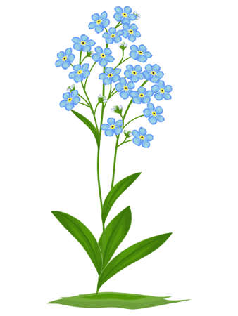 Blue forget-me-nots on a white background