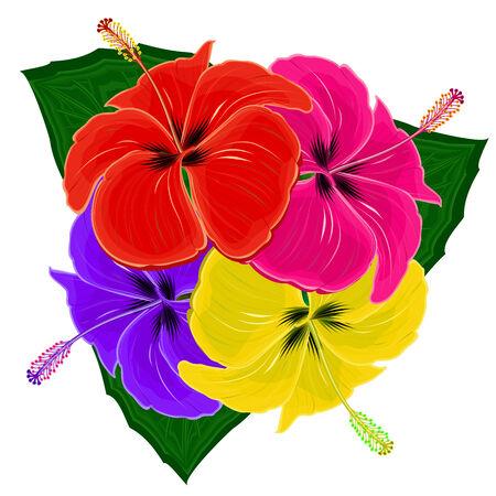 beautiful red hibiscus flower: Cuatro hibiscuses multicolores sobre un fondo blanco