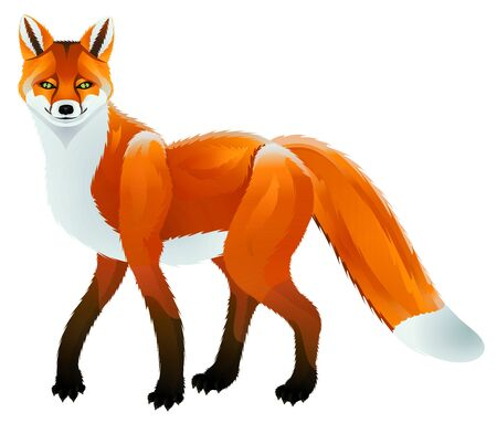 The stylized red fox on a white background
