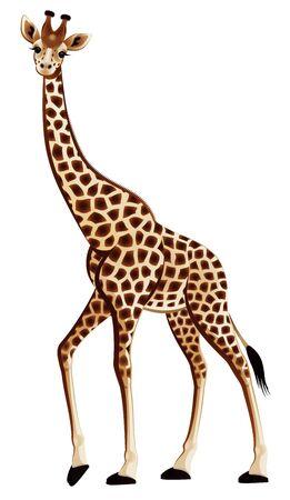 harmonic: Harmonic giraffe on a white background Stock Photo