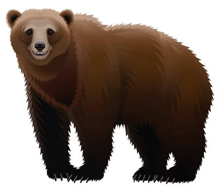 Brown bear on a white background Stock Photo