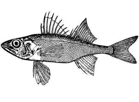 Illustration of fish illustration