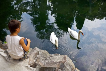 The boy looks at the two swans that swim in a pond. The peninsula of Crimea. Alupka. Vorontsovskim Garden next to the palace. Swan Lake. Stock Photo
