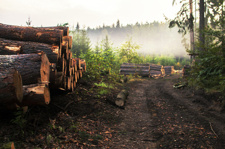 Chopped trees, lumber and wooden logs lying in the forest during deforestation