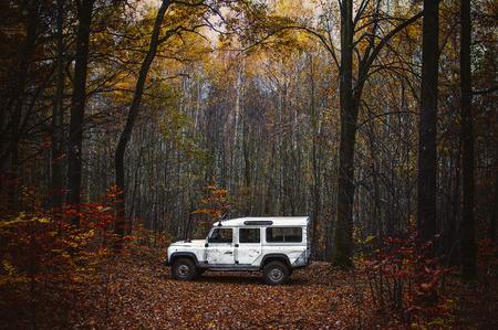 8 월의 숲에서 staning 흰색 offroad 자동차