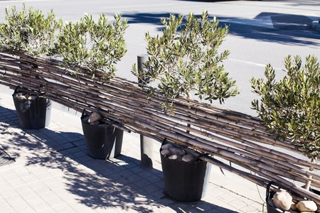 A fence of olive trees in vases and reed branches on the streets of a European city. Street decor