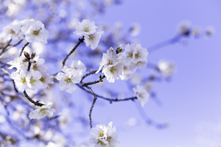 Spring border or background art with pink almond blossoms, beautiful nature scene with blooming tree, sky on an Easter sunny day. Spring flowers in Spain, Europe.