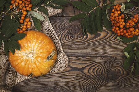 Top view of mini-pumpkins and autumn rowan on a wooden background. Happy Thanksgiving and Harvest Day.