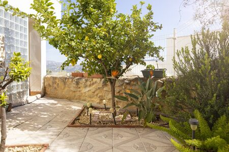 Landscaping with lemon tree and exotic flowers. View of a cozy modern garden terrace design.