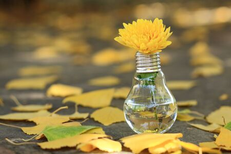 light bulb with yellow flower next to autumn yellow leaves Archivio Fotografico