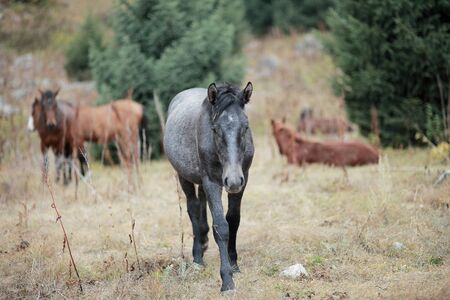 A brown horse standing on top of a dirt field. Cheerful gray horse on a lawn in the mountains. High quality photo