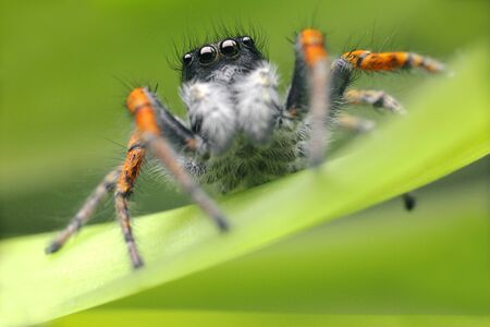Jumping spider close up. Macro shot. Spider portrait. Spider with beautiful eyes close-up. Insect. High quality photo