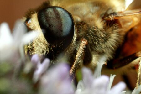a bee collects pollen and nectar, honey from a flower. High quality photo
