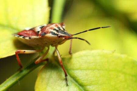 beautiful insect on a juicy green leaf, beetle. High quality photo
