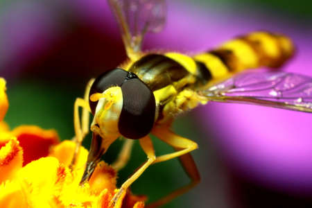 a bee collects pollen and nectar, honey from a flower