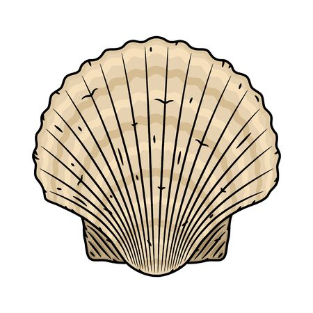 Scallop seashell. Vector isolated on white background.