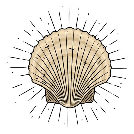 Scallop. Hand drawn vector illustration with Scallop and sunburst. Used for poster, banner, web, t-shirt print, bag print, badges, flyer,  design and more.