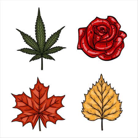 Set of plants - marijuana leaf, rose maple and birch leaves.