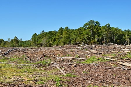 land cleared and trees destroyed by machinery 스톡 콘텐츠