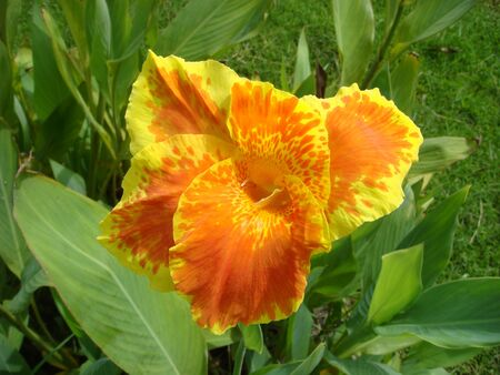 par�?s: Orange flowers, polka dots Found in common In general, it is seen like a sun, planted like a very elegant and minimalistic as ornamental plants in the house.