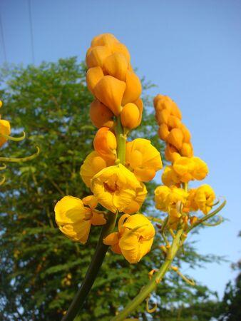 alkalmasság: Az alkalmassági virágok kap nagy fény gyönyörű