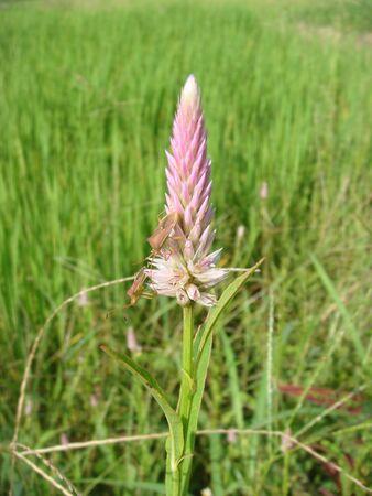 nontoxic: Top central corridor grass nontoxic grow on organic
