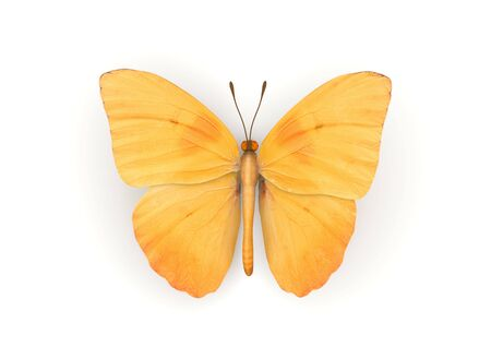 isolation: Orange Butterfly Isolated (3d isolated characters on white background series)