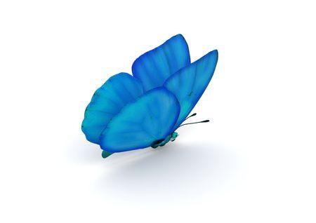 butterflies flying: Blue Butterfly isolata (caratteri isolati 3d su sfondo bianco serie)  Archivio Fotografico
