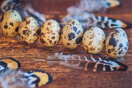 huevos de codorniz: Huevos de codorniz sobre fondo oscuro Foto de archivo
