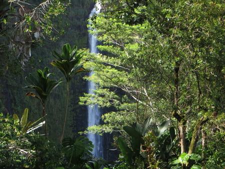 big island: View of the Akaka waterfalls in a state park on Big Island in Hawaii