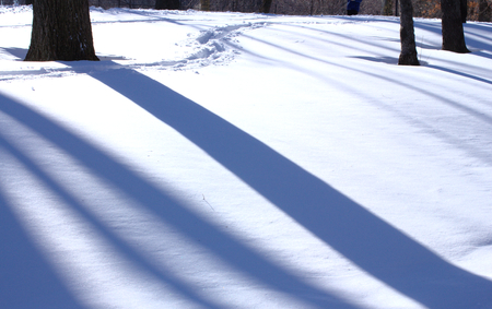 Shadows of several trees on white snow